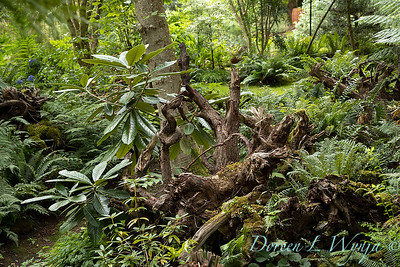 Pat & Walt stumpery garden_343