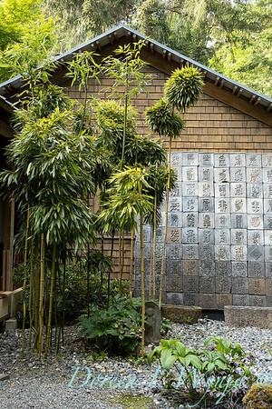 Pat & Walt's garden with stumpery_117