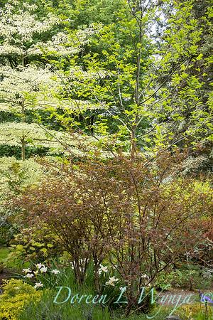 Pat & Walt's garden with stumpery_127