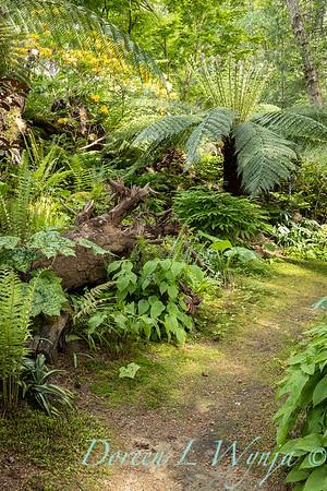 Pat & Walt's garden with stumpery_141