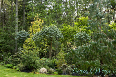 Pat & Walt's garden with stumpery_105