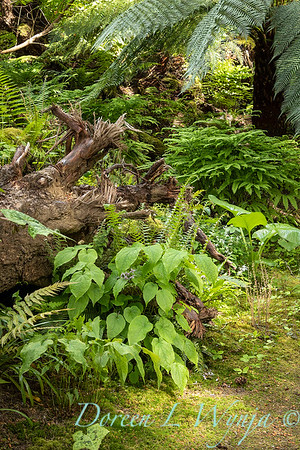 Pat & Walt's garden with stumpery_140