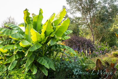 Susan Calhoun - her presonal garden_2585