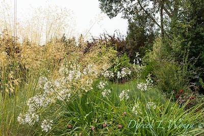 Susan Calhoun - her presonal garden_2617