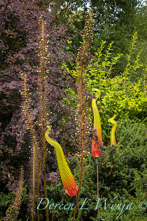 Susan Calhoun - her presonal garden_2589