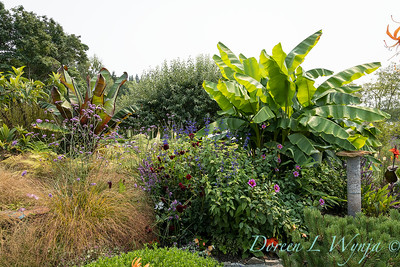 Susan Calhoun - her presonal garden_2581