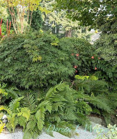 Tanya's garden_191
