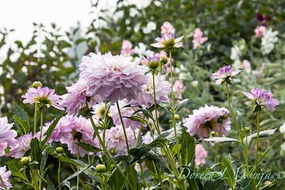 Tanya's garden_183