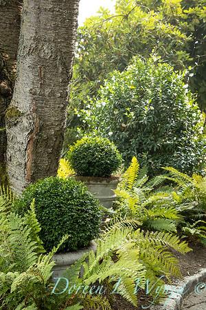 Tanya's garden_192