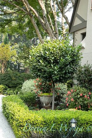 Tanya's garden_158