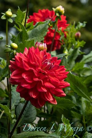 Tanya's garden_178