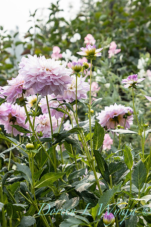 Tanya's garden_182