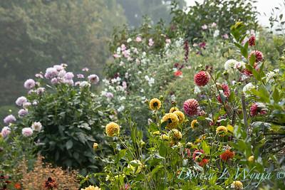 Tanya's garden_190