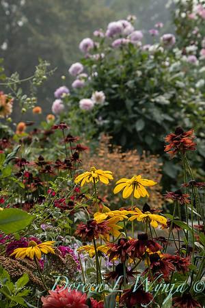 Tanya's garden_181