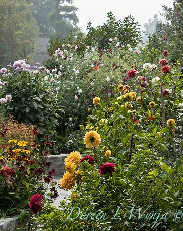 Tanya's garden_189