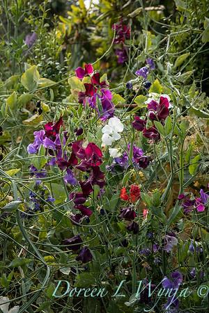Tanya's garden_184
