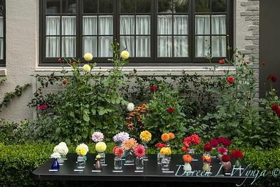 Tanya's garden_151