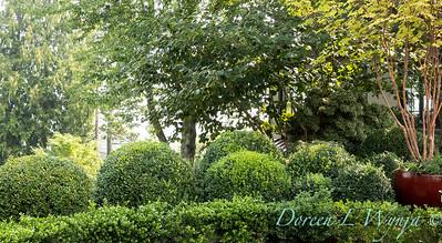 Tanya's garden_166