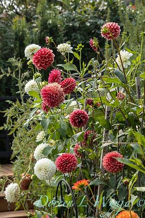 Tanya's garden_180