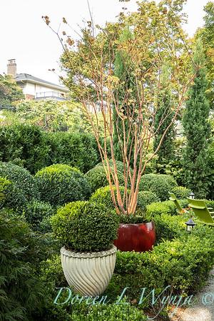 Tanya's garden_160