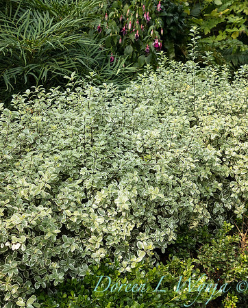 Tanya's garden_194