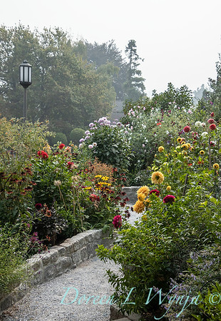 Tanya's garden_188