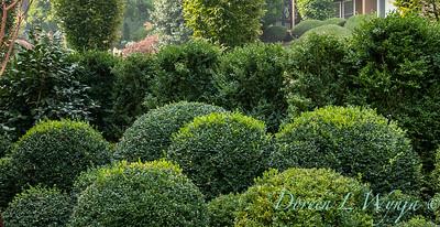 Tanya's garden_165