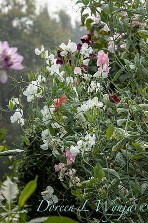 Tanya's garden_186