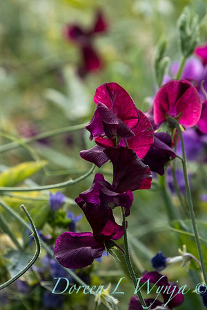 Tanya's garden_187