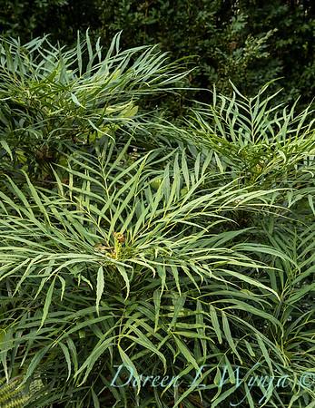Tanya's garden_195