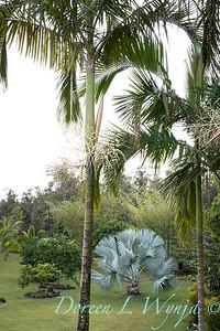 Welsch - Davenport Hawaii_1043