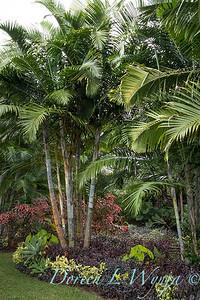 Welsch - Davenport Hawaii_1045