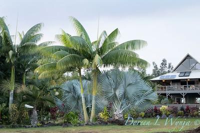 Welsch - Davenport Hawaii_1035