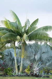Welsch - Davenport Hawaii_1036