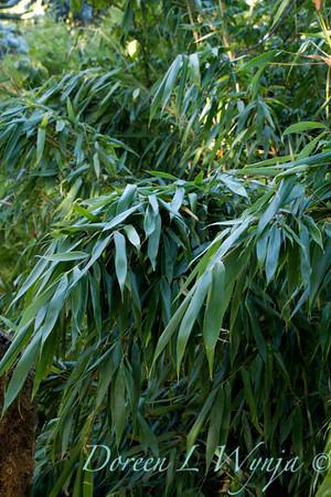 Bamboo_2571