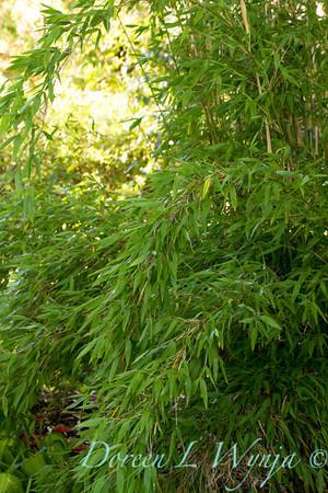 Bamboo_2540
