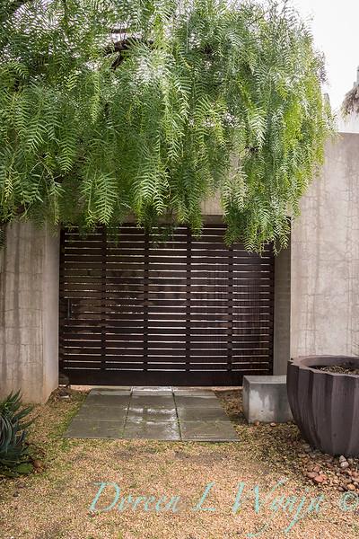 Schinus molle tree - privacy screen_6409