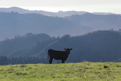 Trails run through an active grazing operation, and visitors may encounter cattle and ranchers.