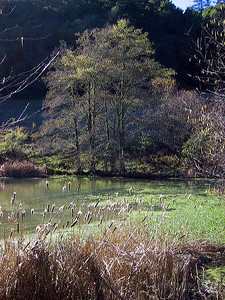 Pond on Peter's Creek Trail at Long Ridge OSP (Photo by Karl Gohl)