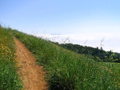 Trail at Russian Ridge OSP (Photo by: Frank Crossman)