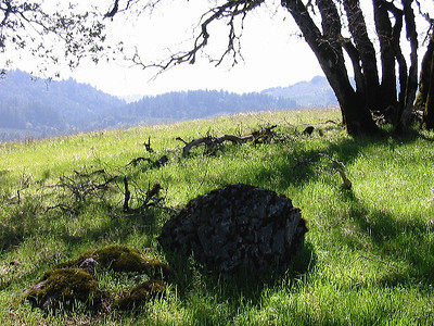In the shade of an oak at Monte Bello OSP (Photo by Frank Crossman)