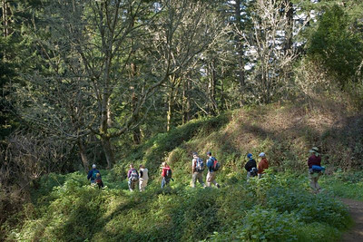 Group on Whittemore Gulch Trail at Purisima Creek Redwoods OSP