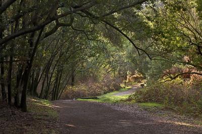 Wildcat Loop Trail at Rancho San Antonio OSP