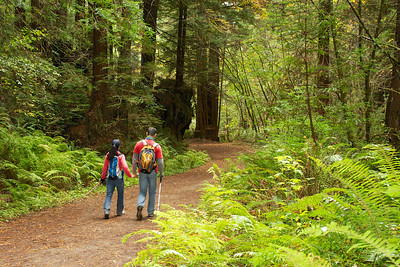 R Weber - Hiking Purisima Creek Trail - Purisima Creek Redwoods OSP Category: People