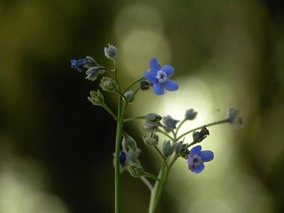 S Martin - Hounds of Glory - Russian Ridge OSP Category: Plant Life