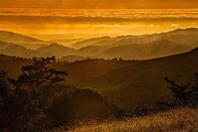 G Hughes - Golden Hour Ridge Trail - Russian Ridge OSP Category: Landscapes