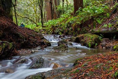 J Martin - Hide and Seek - Purisima Creek OSP Category: People