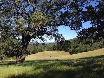 Upper Meadow Trail