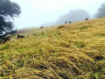 Deer Feeding in the Fog