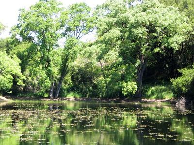 Picchetti Ranch Pond